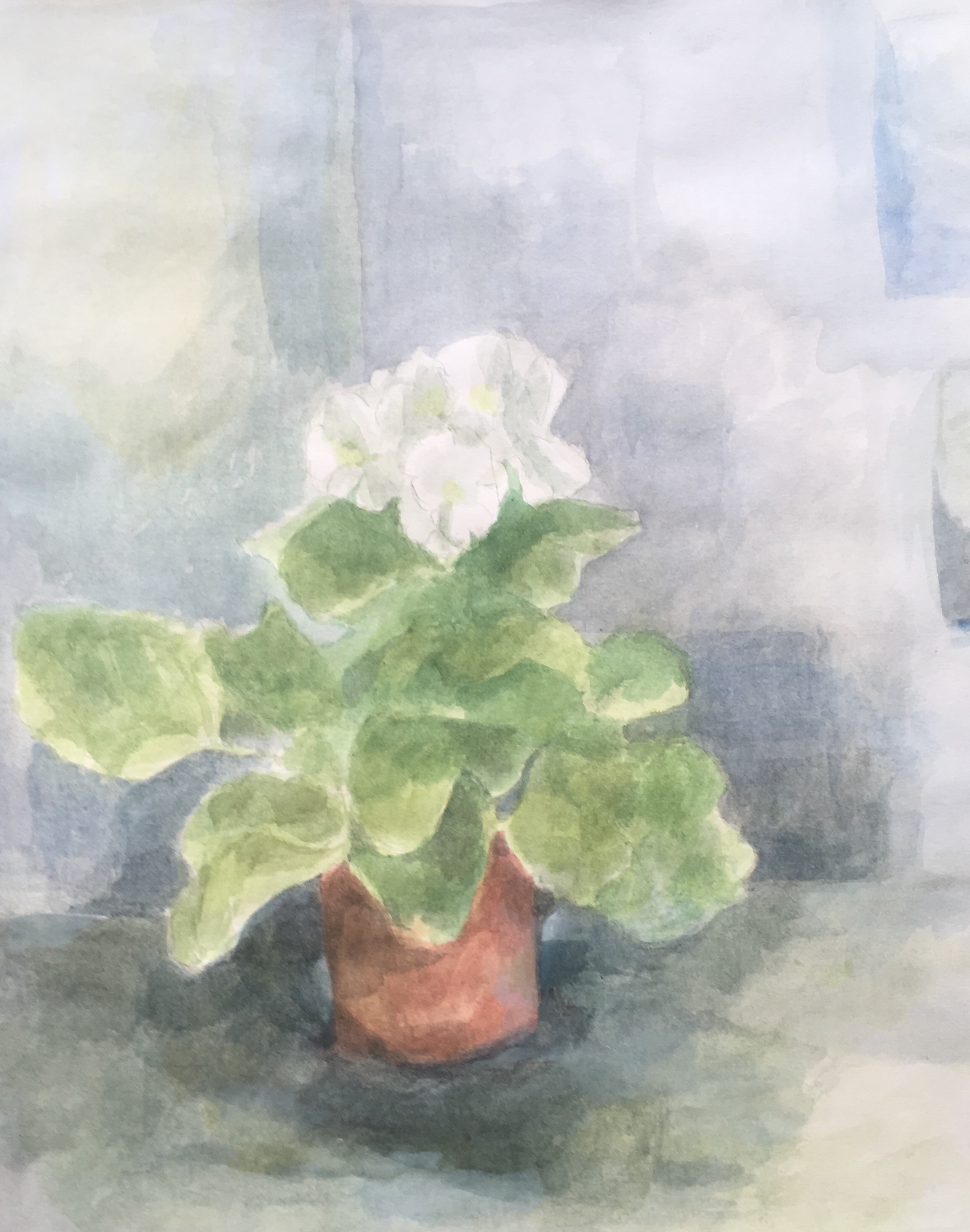 polianthus